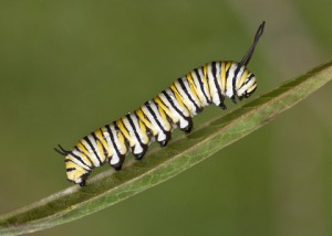 Caterpillar EMDR